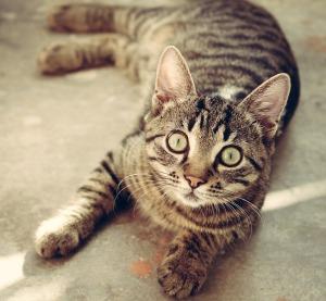 cat-618470_1280