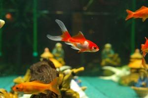 fish-235784_1280