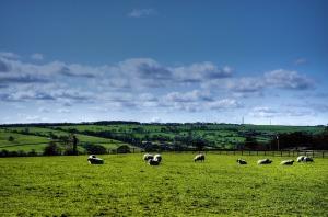 sheep-69406_1280