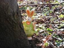 hare-685334_1280