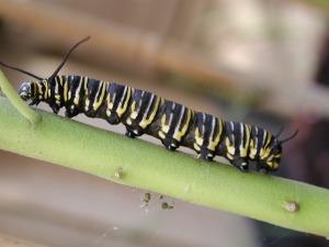 caterpillar-822841_1280