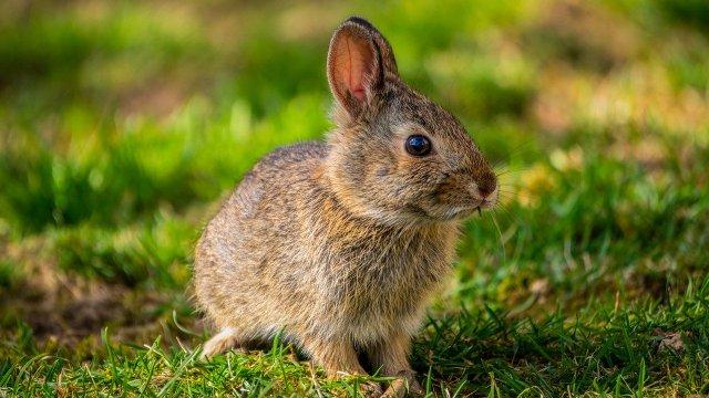 bunny-5014814_1280